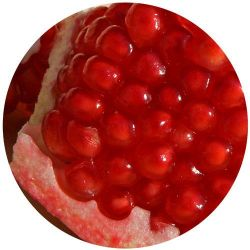 Yoogout Frozen Yogurt Pomegranate
